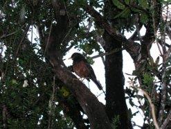 Borneo 123