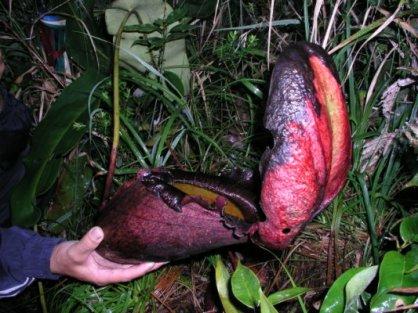 Borneo 167