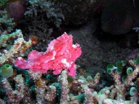 Leaffish 4