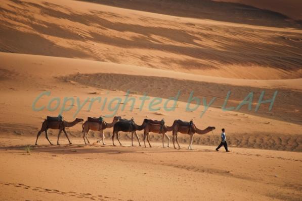 Sahara-11
