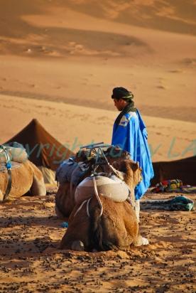 Sahara-12