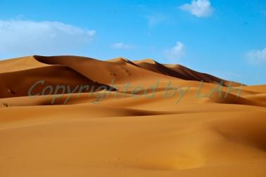 Sahara-14