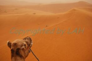 Sahara-2