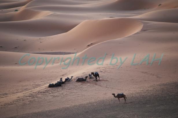 Sahara-8