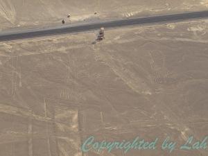 ต้นไม้และมือ (หรือกบ?) ลายเส้นที่มองเห็นได้ทั้งจากเครื่องบินเล็กและหอคอยริมถนน