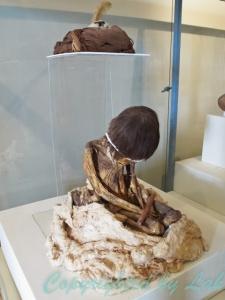 การนั่งของมัมมี่ในหลุมศพที่จัดแสดงอยู่ในพิพิธภัณฑ์