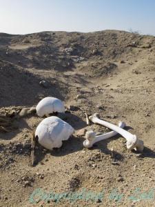 โครงกระดูกโบราณถูกหัวขโมยสุสานขุดค้นและทิ้งขว้างอยู่กลางทะเลทรายบริเวณกาฮัวชี