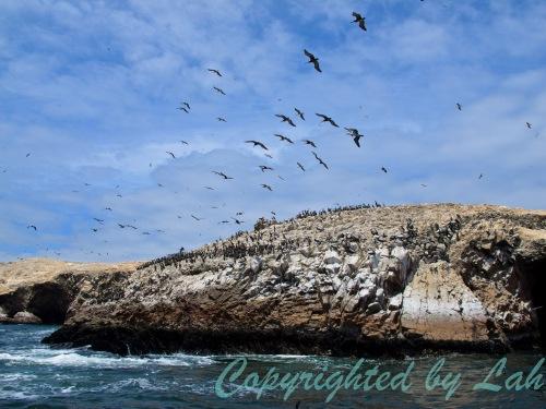 Islas Ballestas เกาะสงวนสำหรับนกและสัตว์ทะเล กลางทะเล
