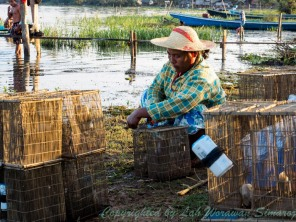 A local villager is preparing the fish traps.