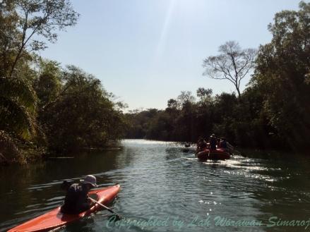 เจ้าหน้าที่พายเรือคายัดตามเรือยางนั่งท่องเที่ยวเพื่อถ่ายรูปและหาสัตว์ป่าอย่างงูอนาคอนด้าให้ชม
