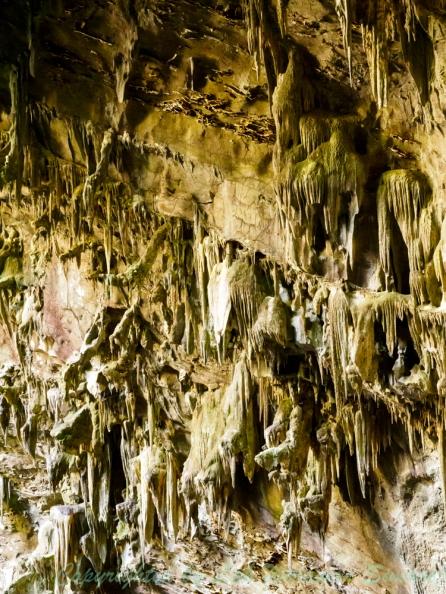 ลักษณะของหินย้อยสีเหลืองๆในถ้ำเนื่องจากไม่ค่อยได้รับอิทธิพลจากแสงอาทิตย์