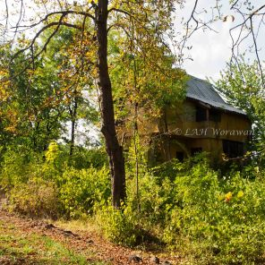Old abandoned house in the forest on the hill.