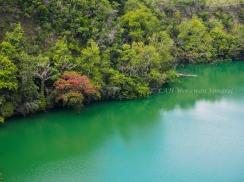 น้ำสีเขียวกับป่าโดยรอบที่ทะเลสาบ Tolire